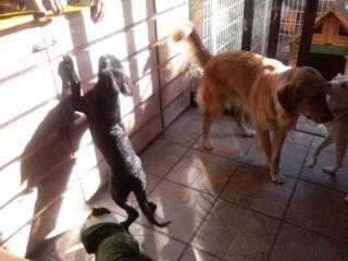 犬がいっぱい