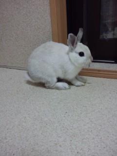 世界最大のウサギと世界最小のウサギ