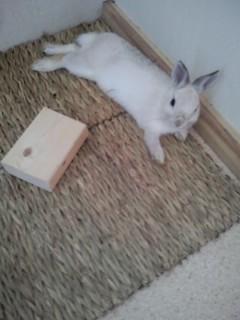 伸びるウサギさん