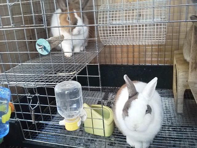 ウサギ小屋の掃除